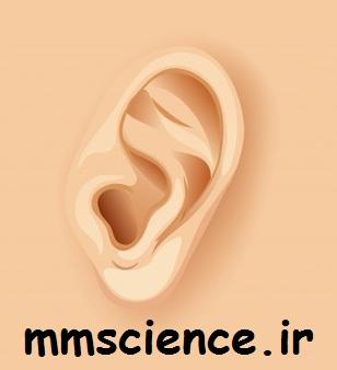 فصل حس و حرکت علوم هشتم شنوایی
