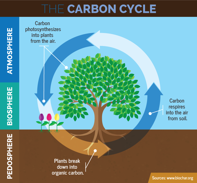 The_carbon_cycle_biosphere.png