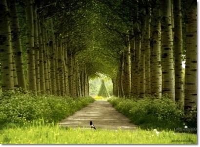 http://s9.picofile.com/file/8339047250/b11.jpg