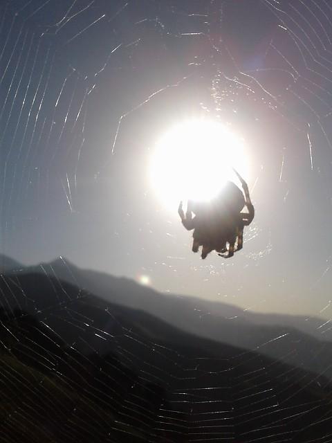 عنکبوت گرفتگی