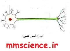 نامگذاری بخش های نرون علوم هشتم