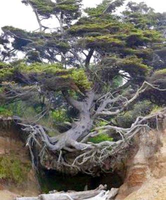 تنهاترین درخت