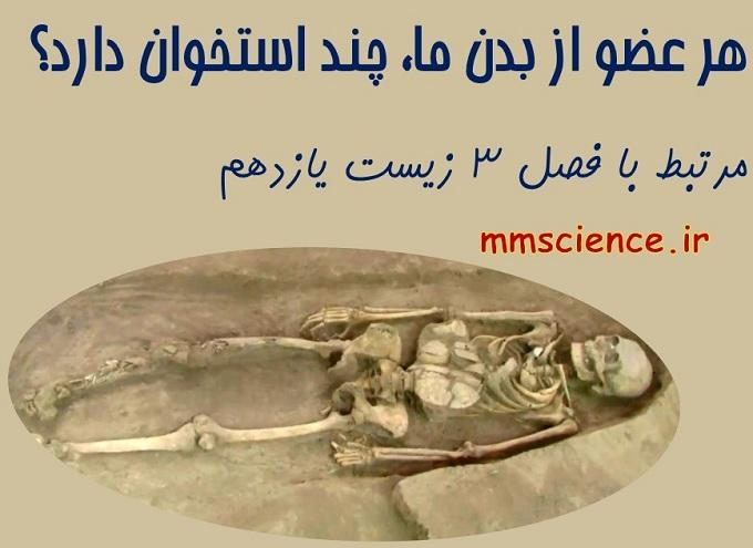 تعداد استخوان های هر قسمت از بدن