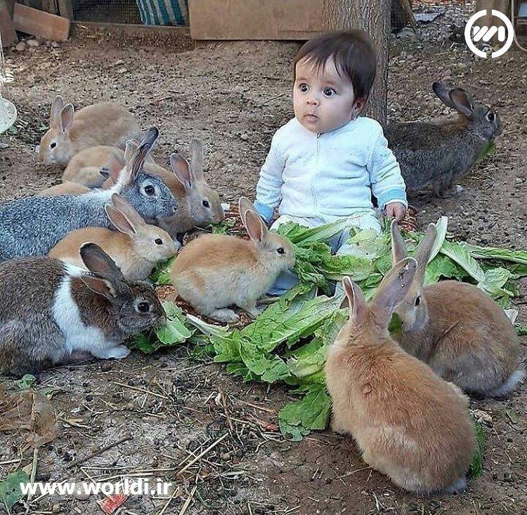 حرگوش ها و کودک