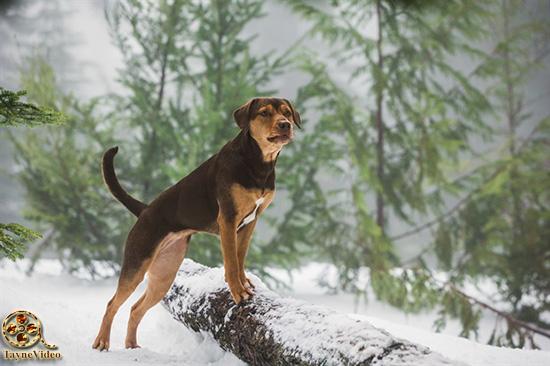 دانلود فیلم مسیر یک سگ تا خانه A Dog's Way Home 2019