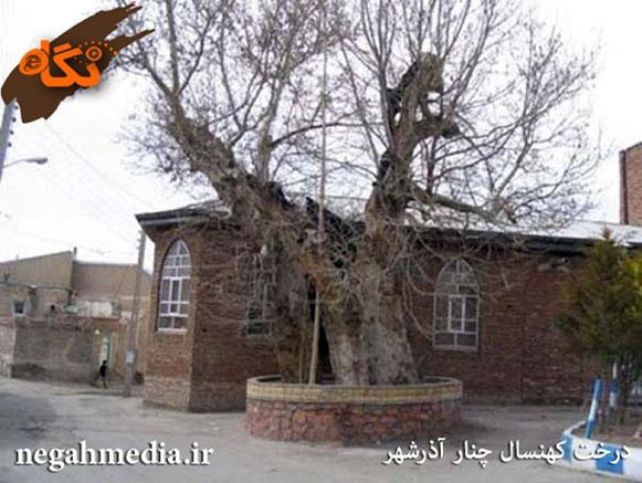 چنار آذرشهر