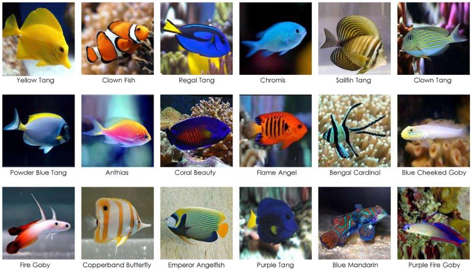 ماهی های آب شور