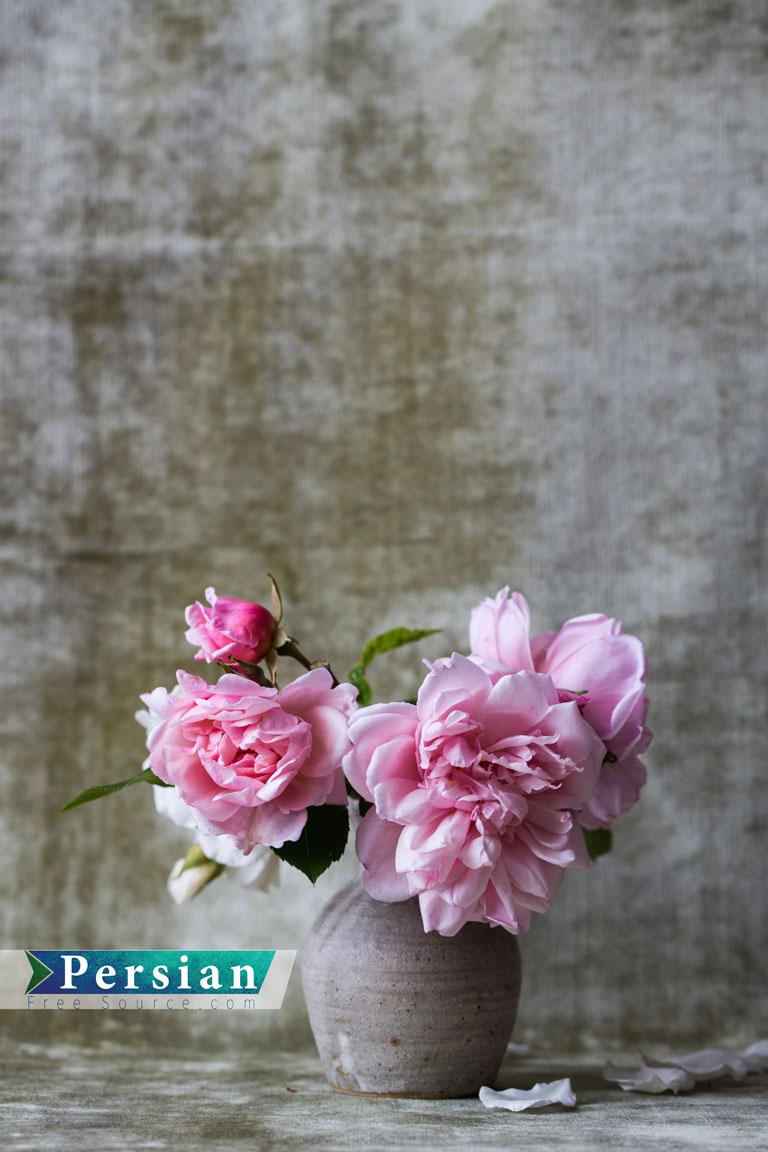 دانلود عکس با کیفیت گلدان سفالی و گل سرخ