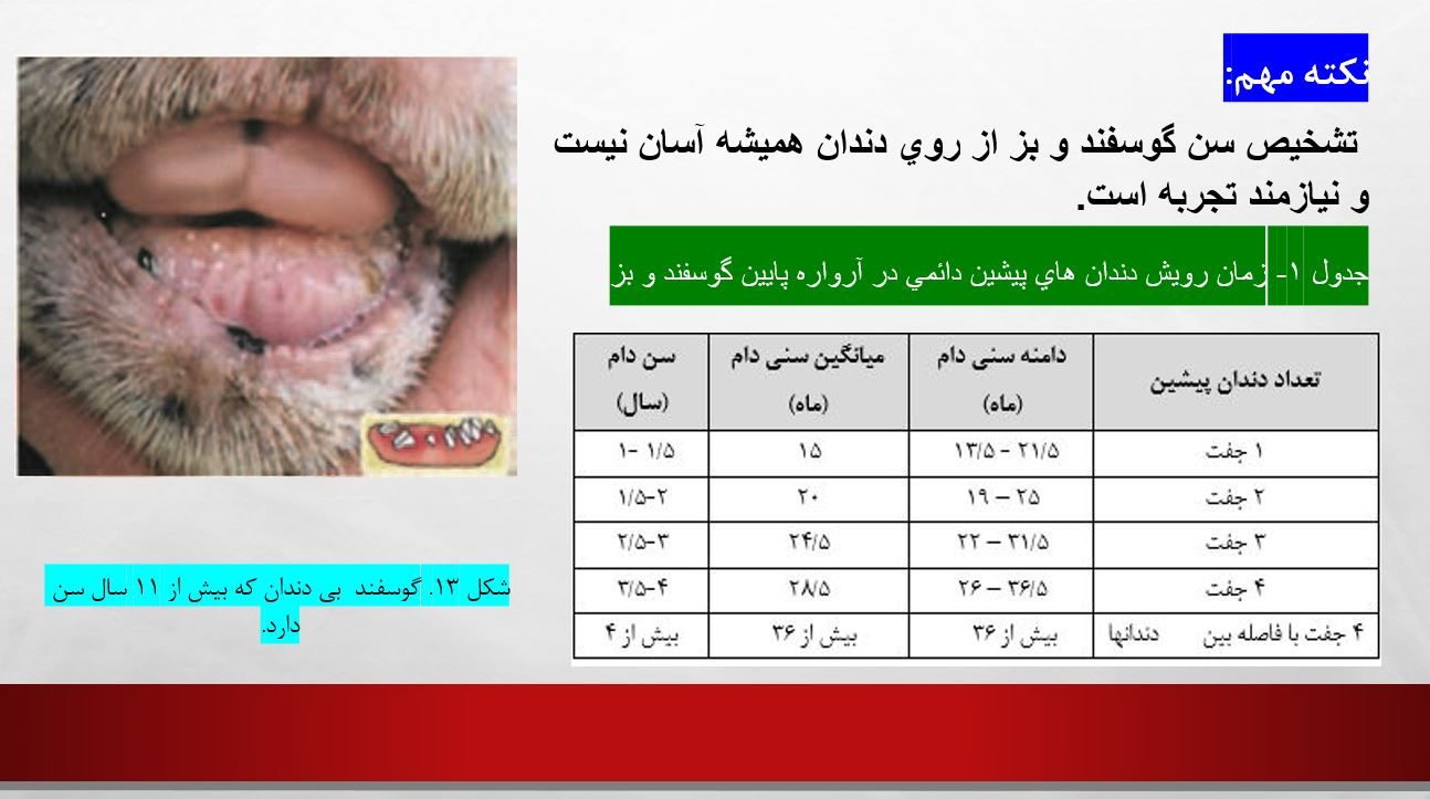 دانلود مقاله تعیین سن در گوسفند وبز به صورت پاورپوینت- تشخیص سن در گوسفندو بز- عکس دندان گوسفندان - سن بلوغ گوسفندان