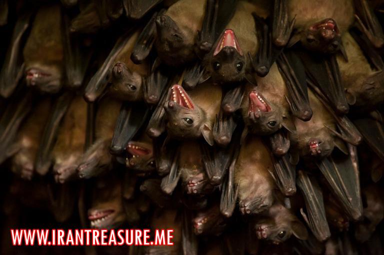 YARASA پرده برداشن از راز خریدوفروش لانه خفاش ها