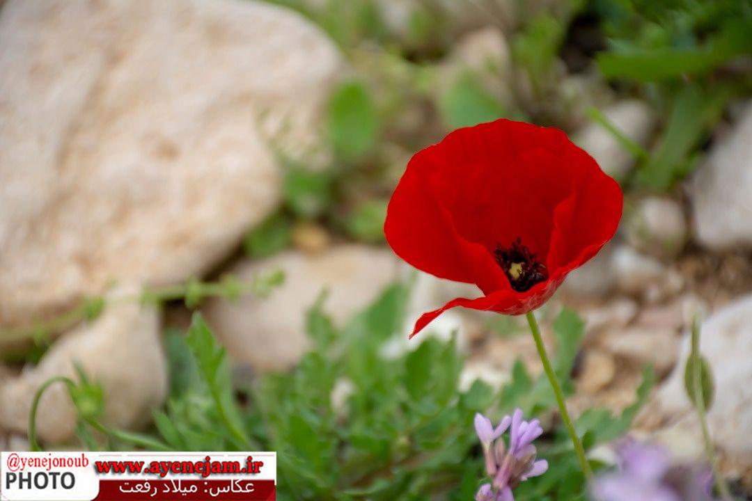 http://s9.picofile.com/file/8354972526/455207804_167692.jpg