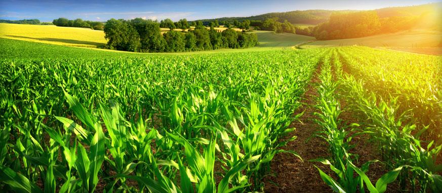 کشاورزی دقیق ، مقاله کشاورزی دقیق ، دانلود مقاله رایگان ، مهندسی مکانیک بیوسیستم ، مکانیک ماشین های کشاورزی