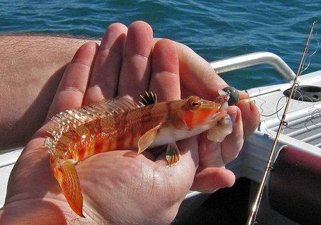 ماهی های خلیج فارس