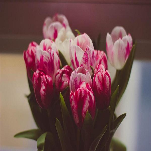 شعر دلشکستگی غمگین از زندگی و عشق + بوسه عاشقانه