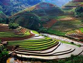 http://s9.picofile.com/file/8364879926/rice_terraces_31166_600x450.jpg