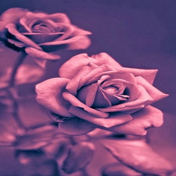 شعر غمگین از عشق و تنهایی